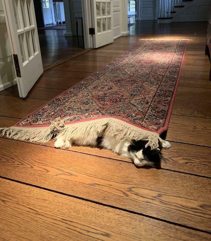 Котик отдыхает под ковром.