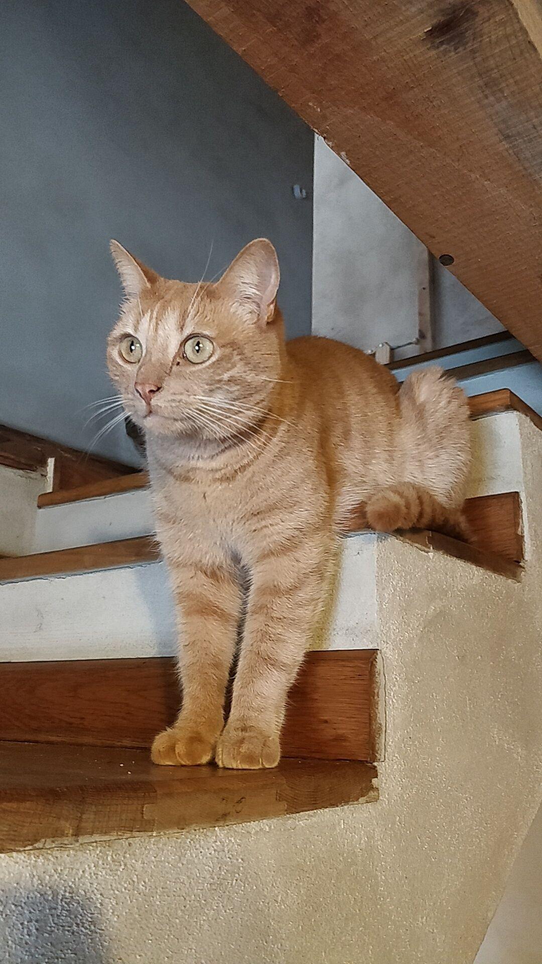 Любимец отдыхает на лестнице.