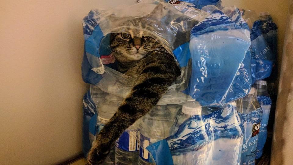 Кот обожает проводить время в пакетах.