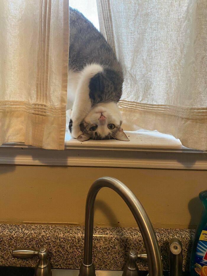 Кошечка требует внимания.