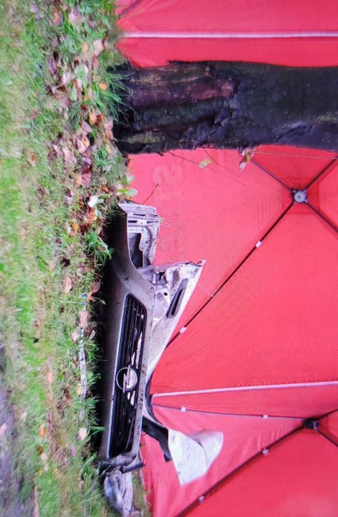 Opel зім'яло від удару з деревом