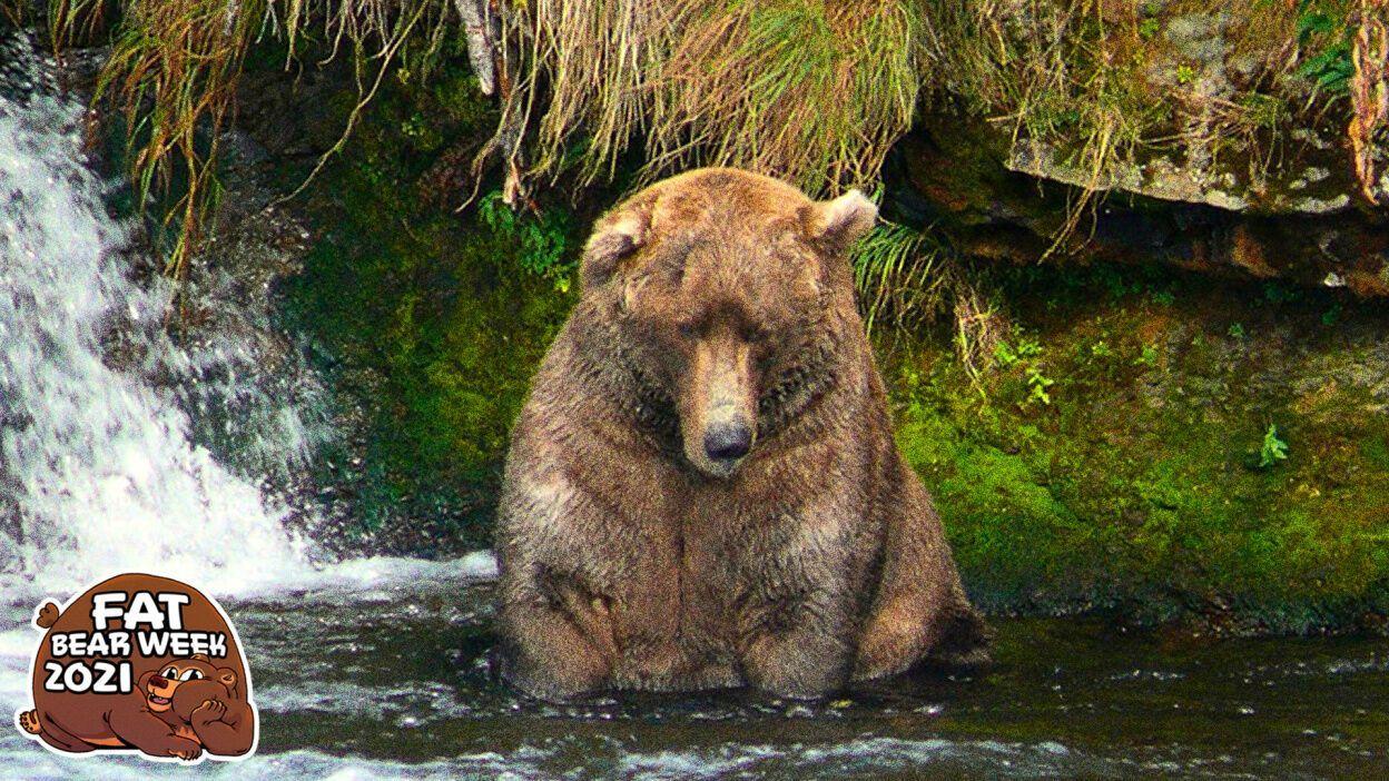 """Переможець у номінації """"Найтовстіший ведмідь"""""""