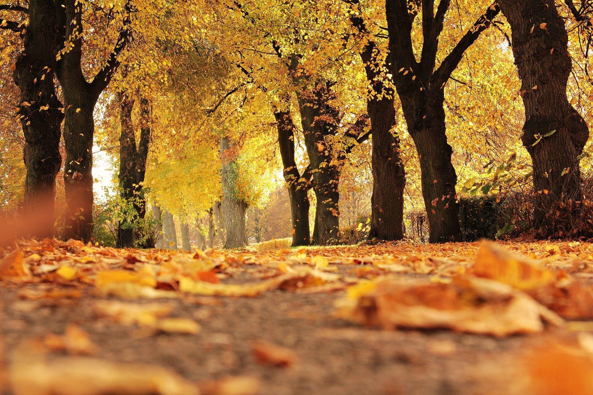 3 октября - праздник