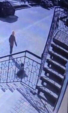 Момент нападения собак на ребенка попал на камеры наблюдения