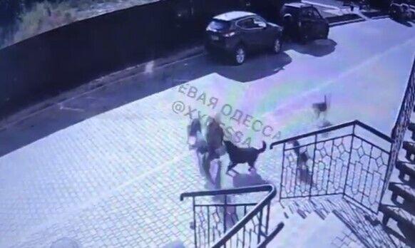 Нападение животных на ребенка возле многоэтажки