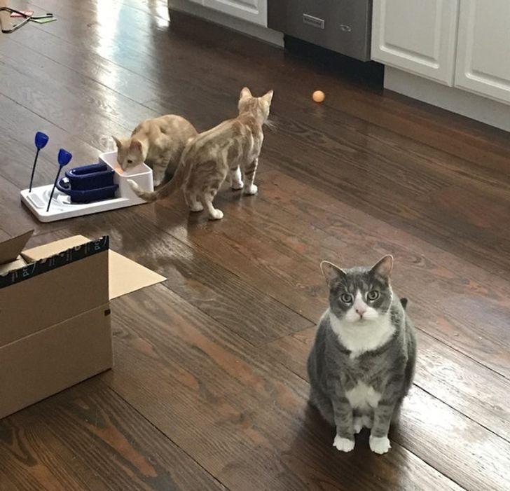 Недовольная кошачья мама