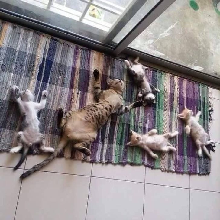 Семья котиков