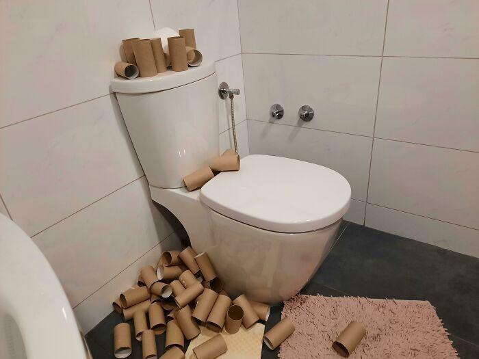 Гора остатков туалетной бумаги