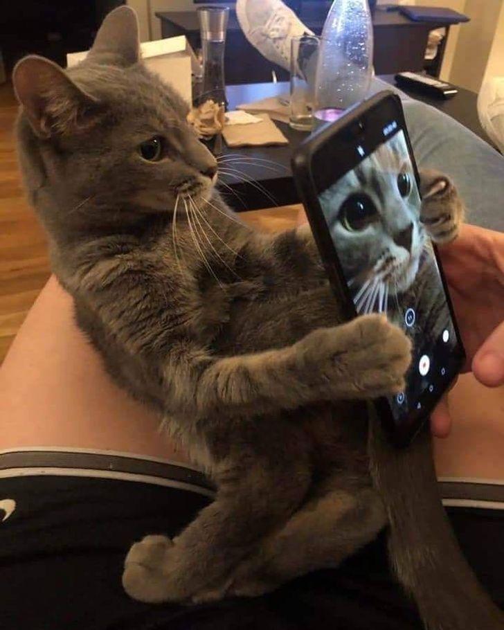 Кот делает селфи.