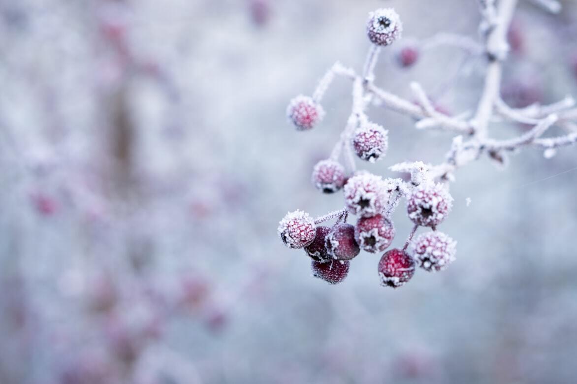 Холодні зими в Україні будуть навіть в умовах глобального потепління.