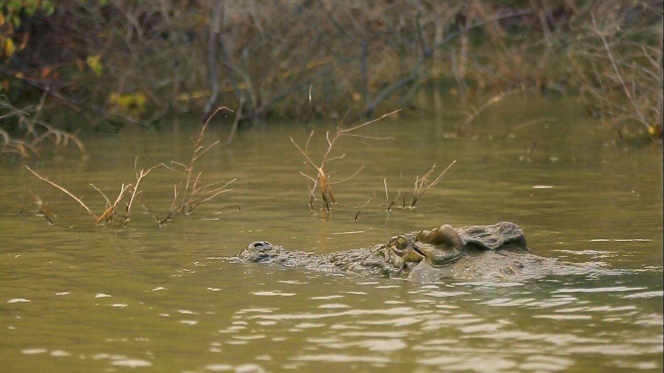 Василиса Хвостова показала нильского крокодила