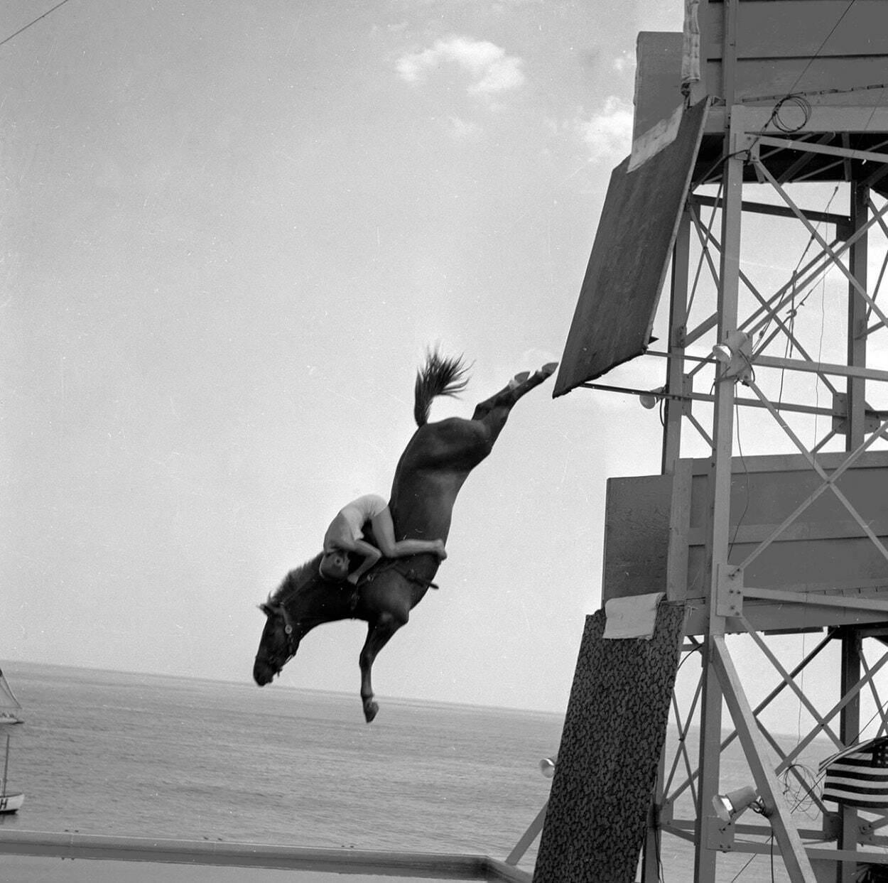 Автором идеи нырять на коне с высоты был американский стоматолог и шоумен Уильям Карвер,