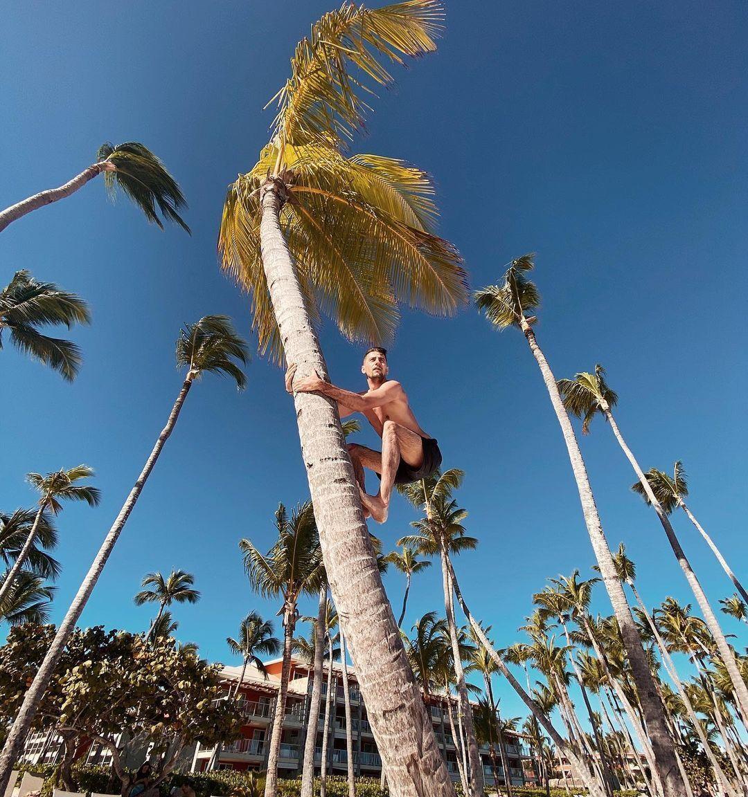 Александр Эллерт взобрался на пальму