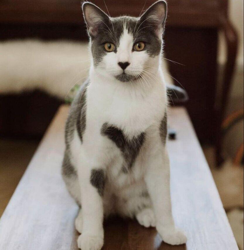 Кіт незвичайного забарвлення став знаменитим