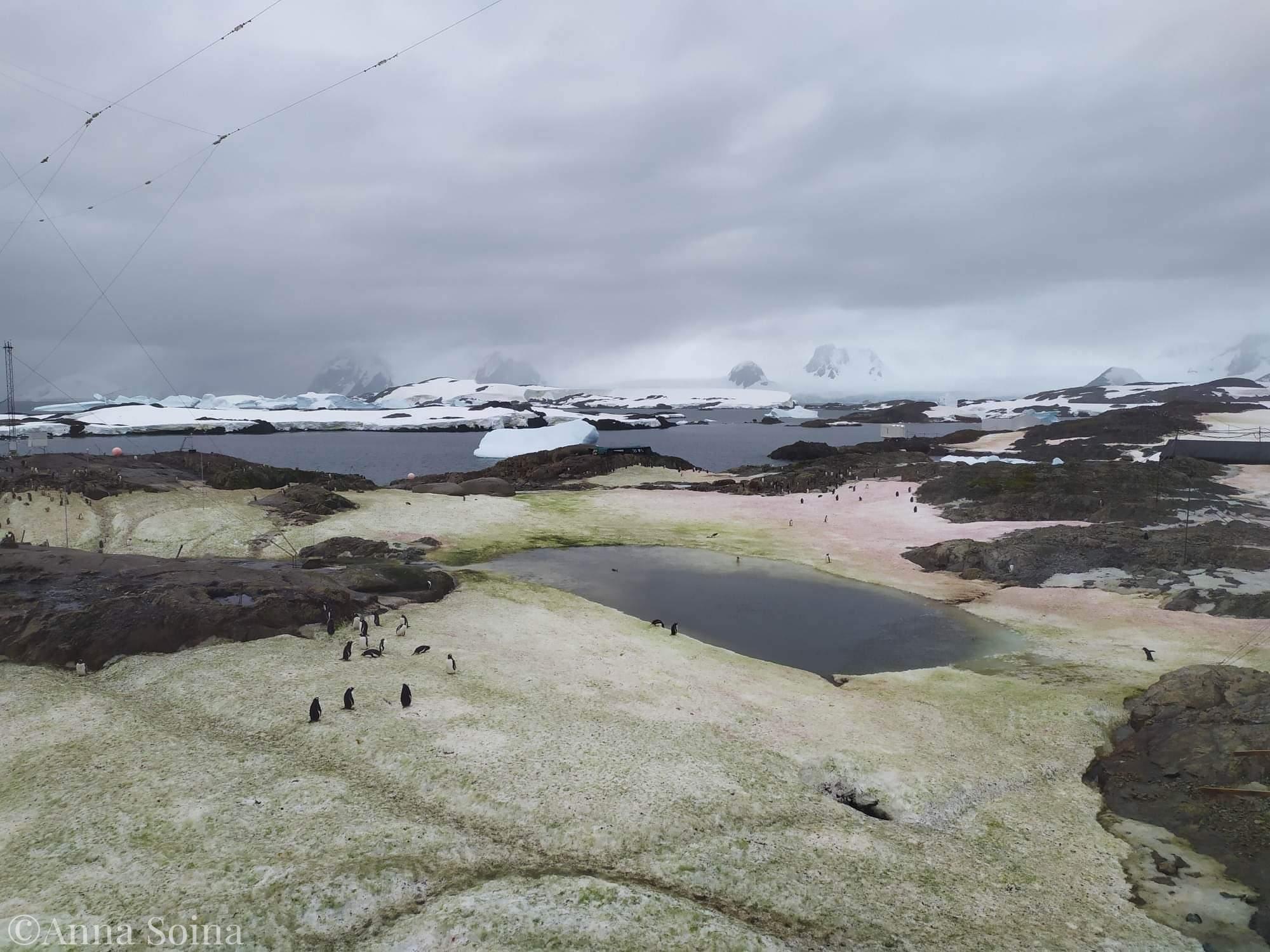 Сніг із зеленим відтінком в Антарктиді