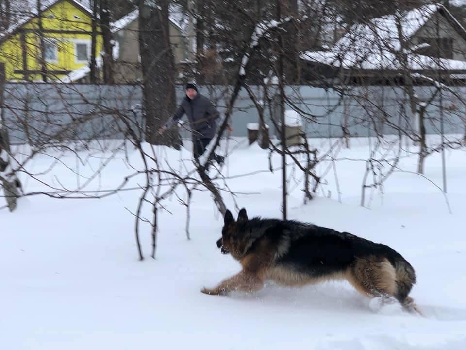 Савченко с собакой