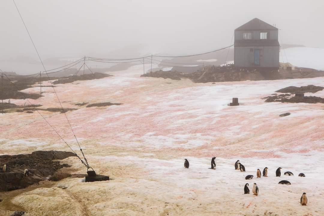 Пінгвіни на кольоровому снігу