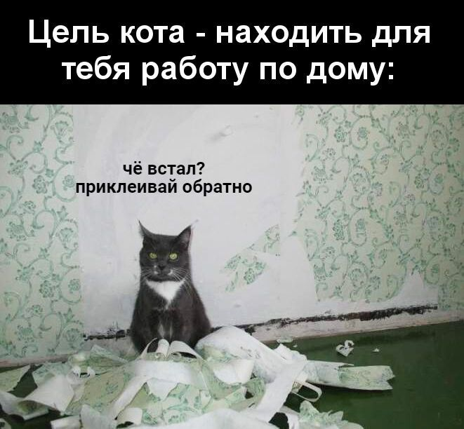Прикол про кота