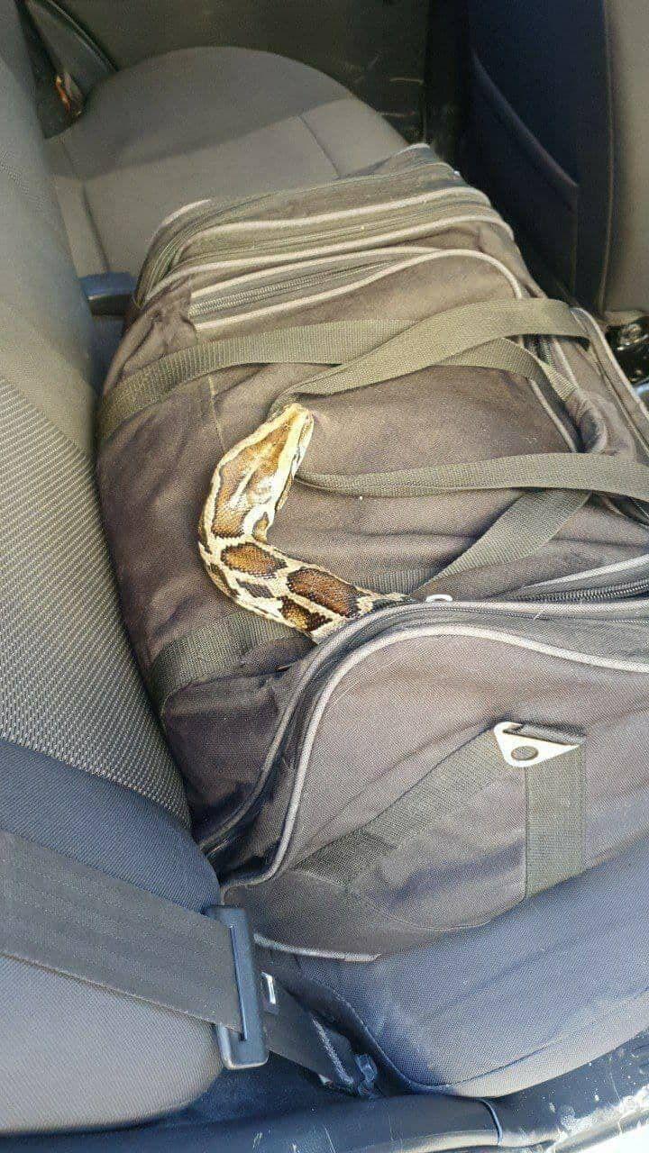 """В сумке с """"пирожными"""" оказалась змея"""