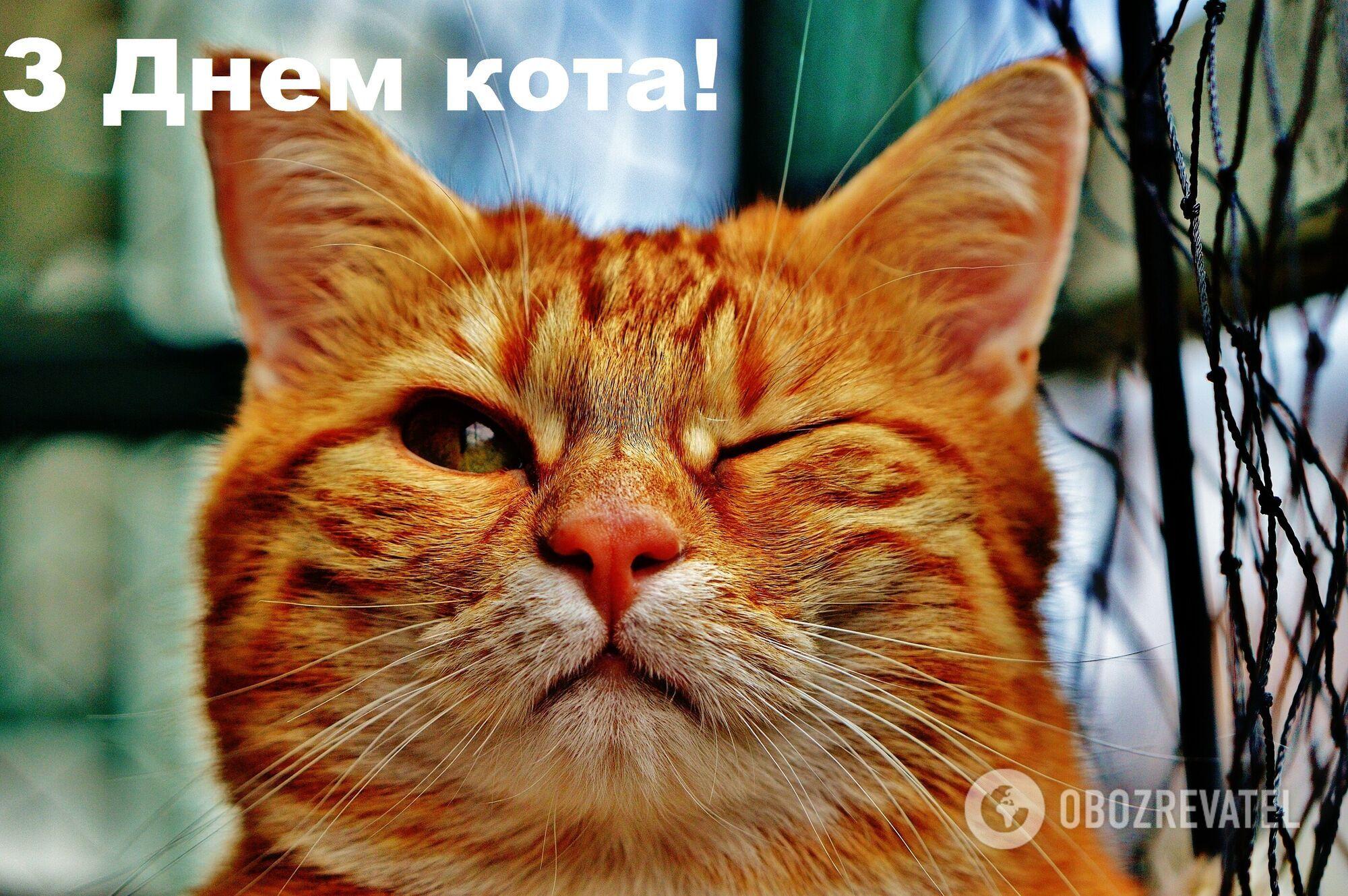 З Днем кота
