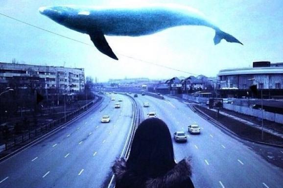 """Самая известная группа смерти """"Синий кит"""" появилась несколько лет назад"""