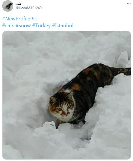Жителі Туреччини показали наслідки негоди