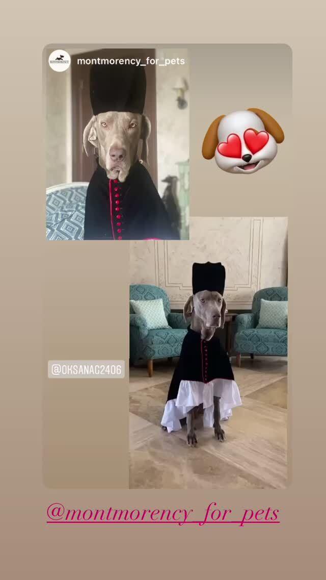 Вдова Кернеса нарядила его собаку