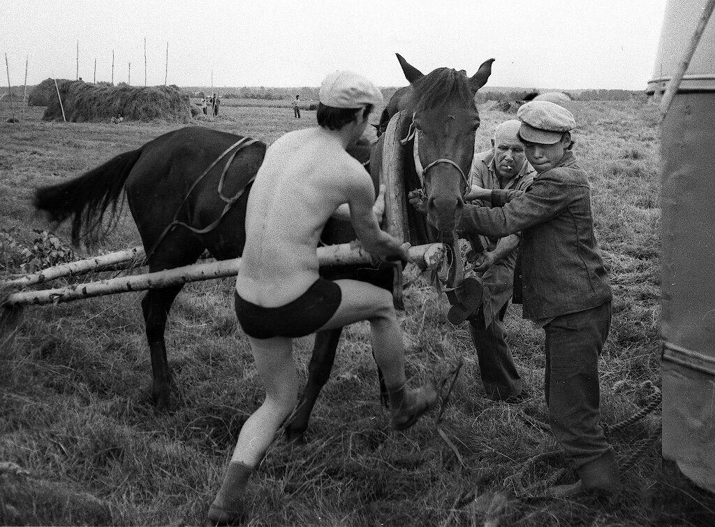 СССР, поле, лошадь и оглобли