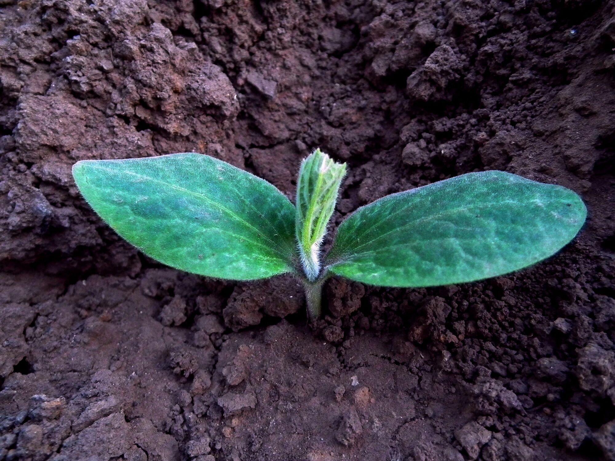 В марте дачники высаживают рассаду овощей