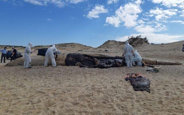 Загрязнение привело к гибели многих морских существ