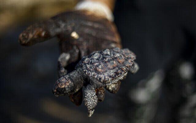 Рыбы, черепахи и другие морские существа загрязненные дегтем