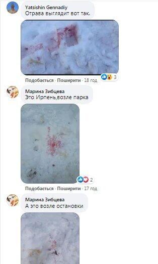 """У Києві переполох через отруєння собак """"рожевим снігом"""": як уберегти домашніх улюбленців"""