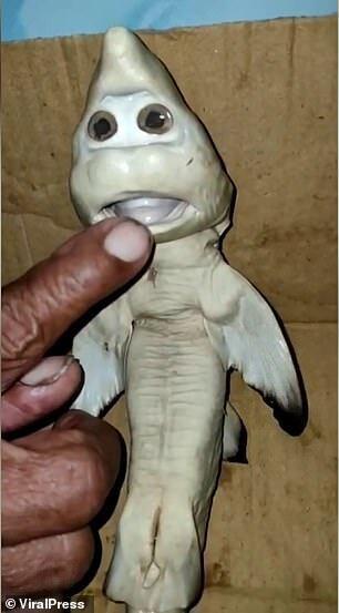 """Маля акули має моторошний вигляд через схожі на людські """"очі"""" й """"рот"""""""