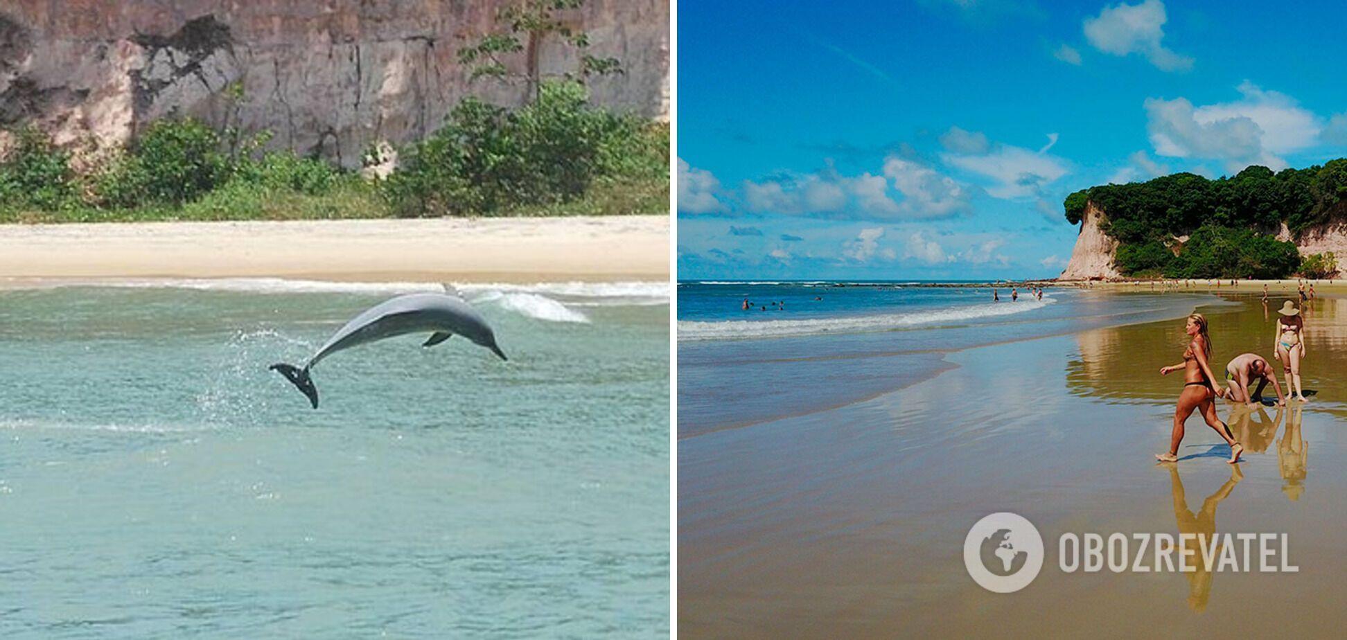 Baía dos Golfinhos у Бразилії приваблює туристів дельфінами, які живуть поряд з узбережжям.