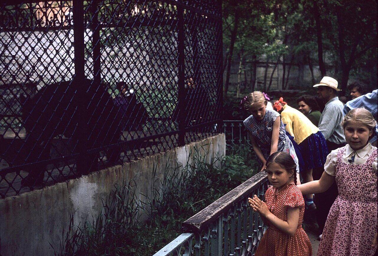 Дети смотрят на медведя в зоопарке