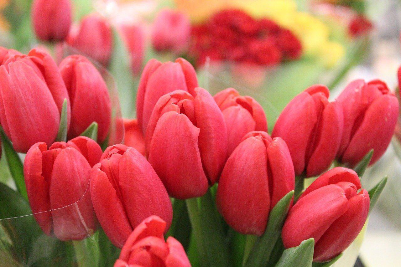 8 Марта женщинам принято дарить цветы и подарки