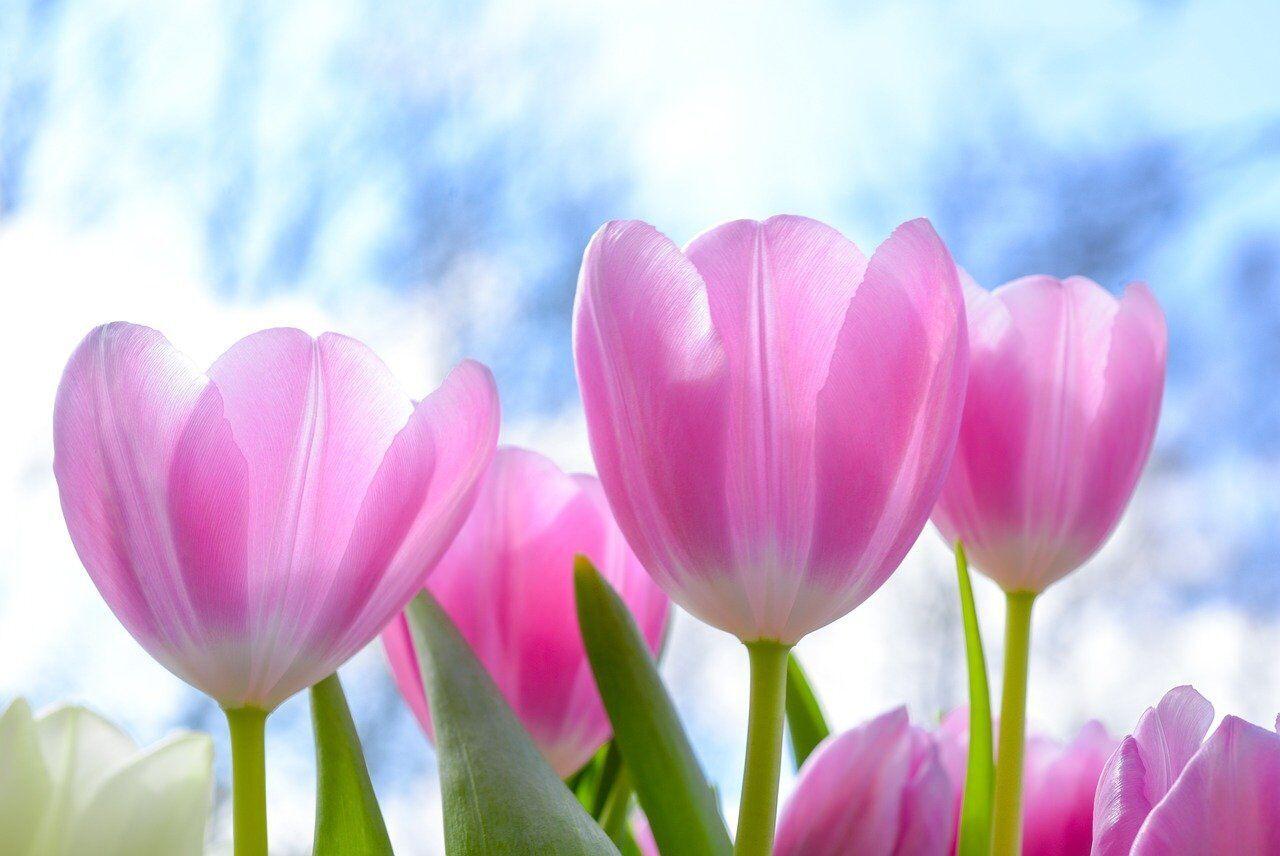 8 Березня жінкам дарують квіти та подарунки