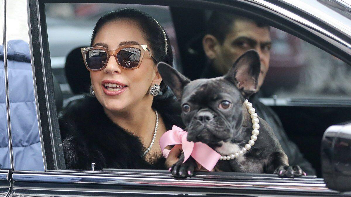Леді Гага з бульдогом на заході.