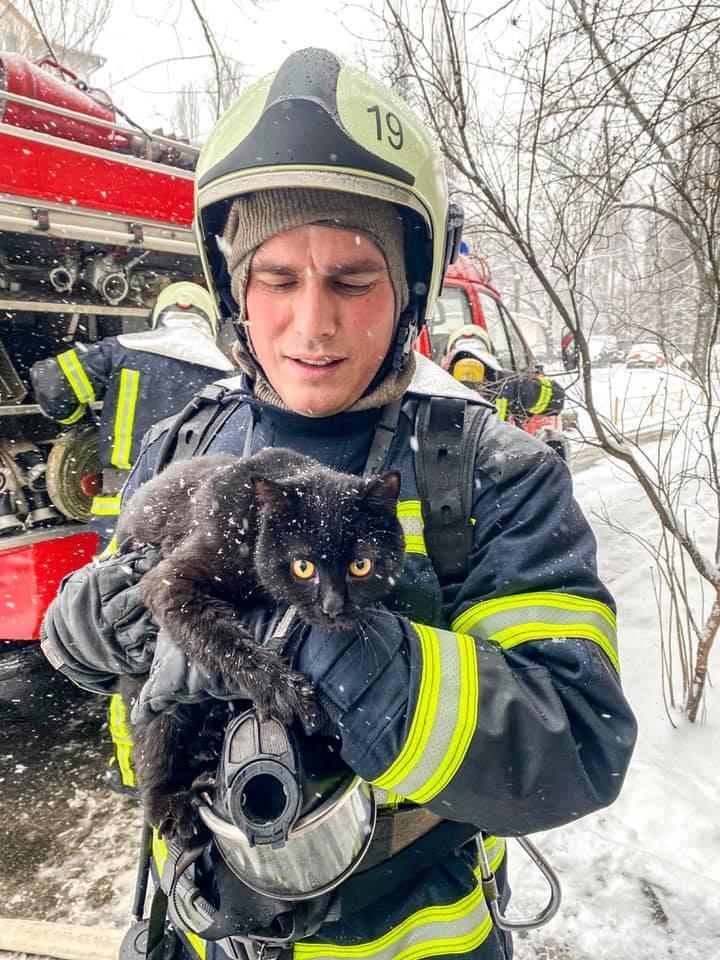 Врятований кіт.