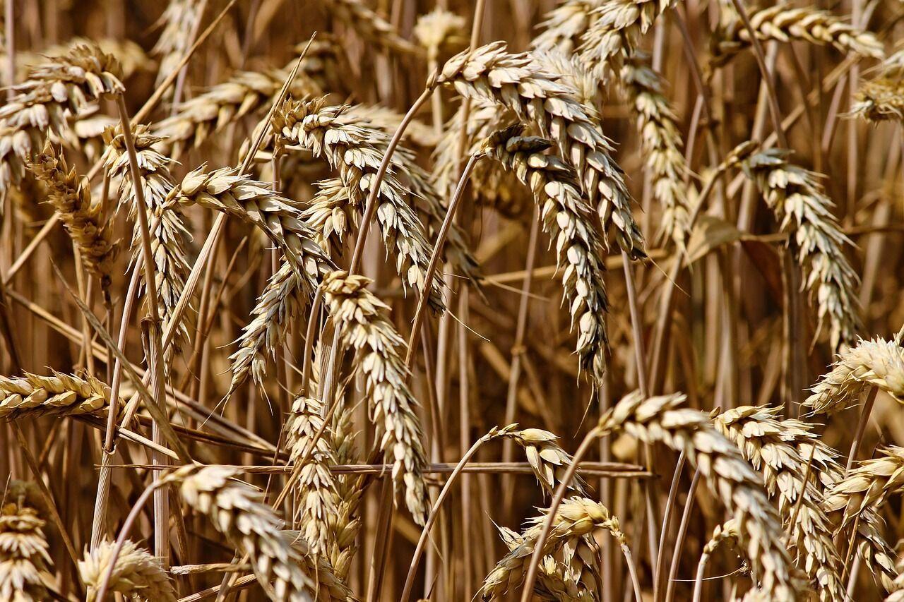 Що буде з цінами на зерно