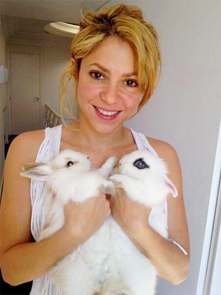 Певица Шакира содержит двух кроликов и бульдога.