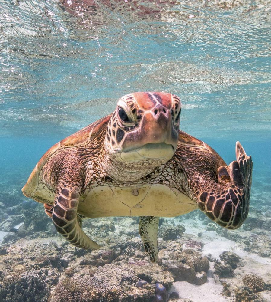 Поважна черепаха була не в гуморі для підводної фотосесії