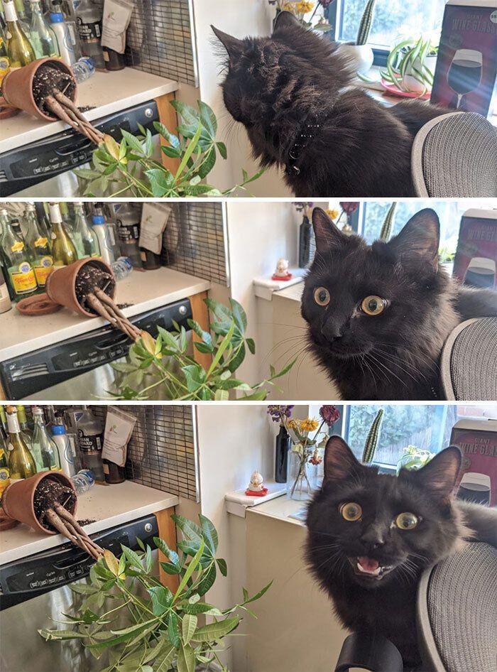 Кіт проявляв свої природні інстинкти і ховав щось у землю