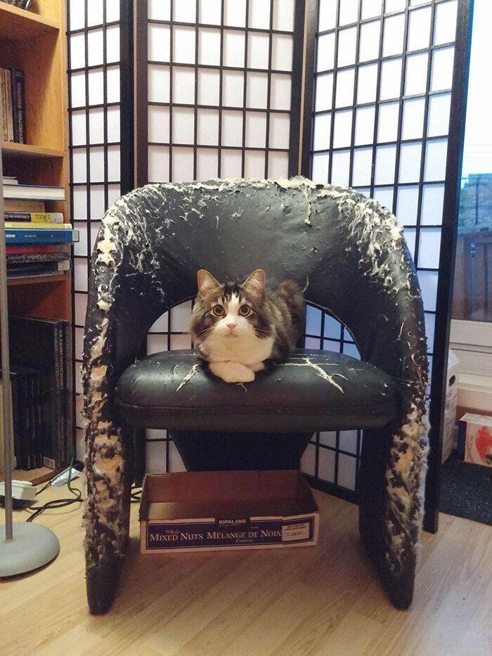 Кіт точив кігтики об новеньке шкіряне крісло