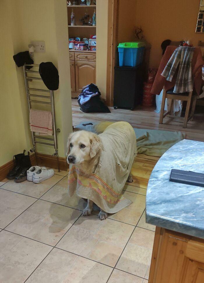Пес влаштував костюмовану вечірку.