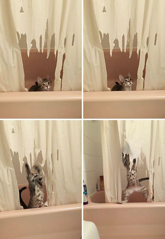 Кішечка хотіла дізнатися, хто ховається за шторою у ванній