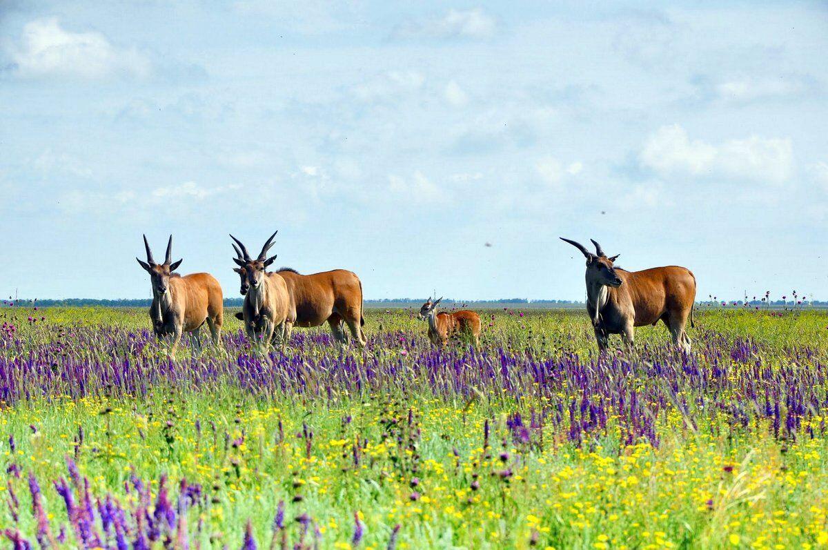 В заповеднике можно посмотреть на различных животных и увидеть более 1000 видов древесных растений.