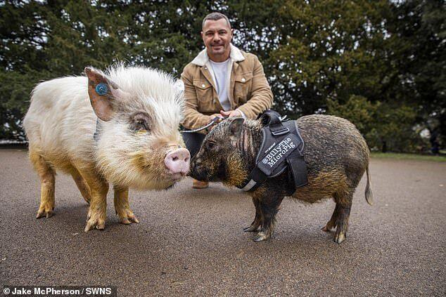 Как выглядят свинки Билли и Франклин