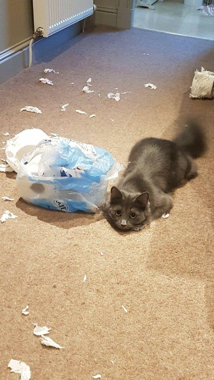 Кішечка бавилася з пакетом використаного туалетного паперу.