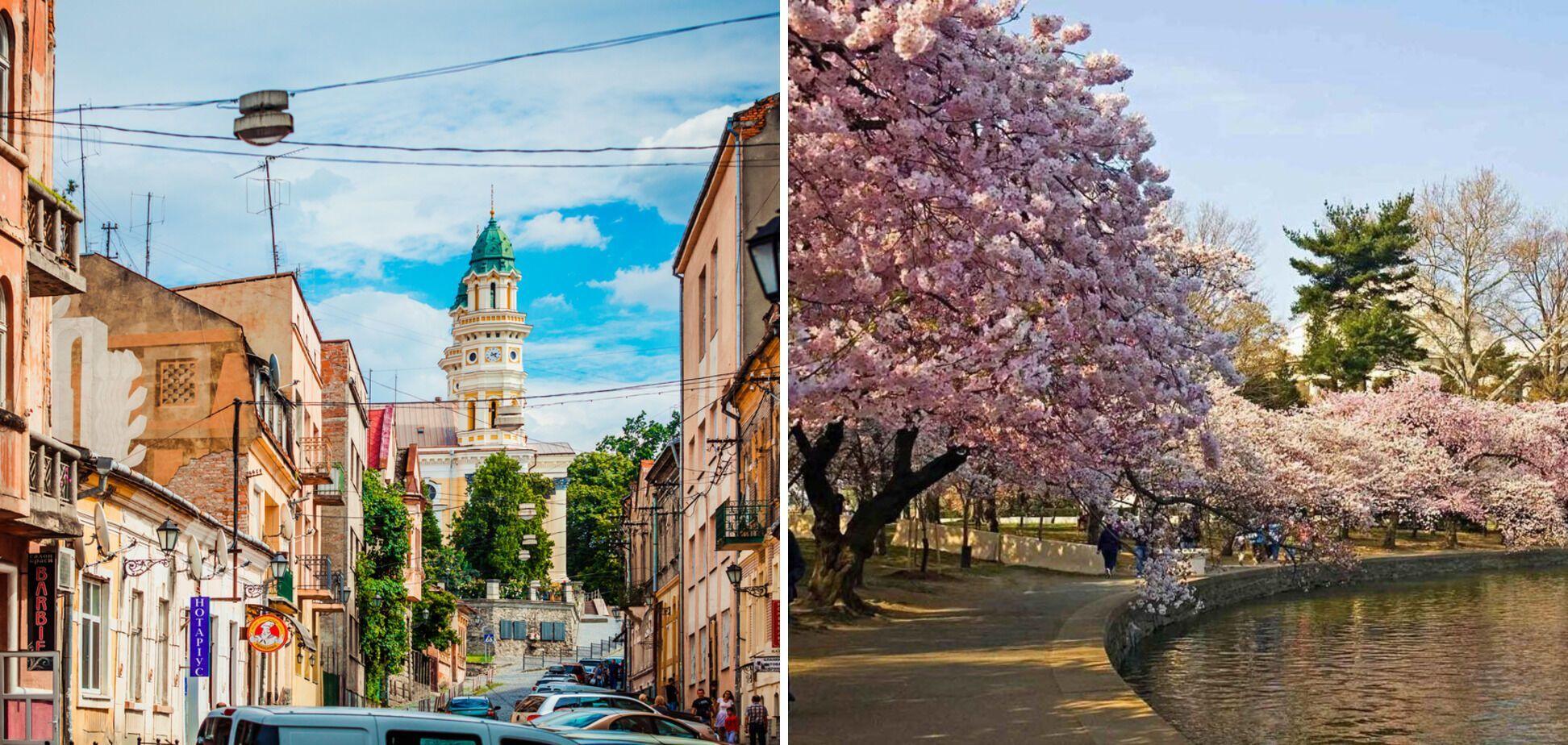 Весной Ужгород окутывает цветение сакур.
